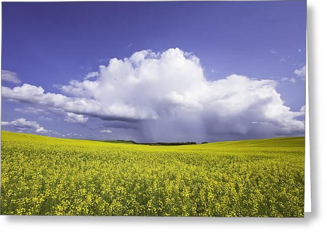 Rainstorm Over Canola Field Crop Greeting Card by Ken Gillespie