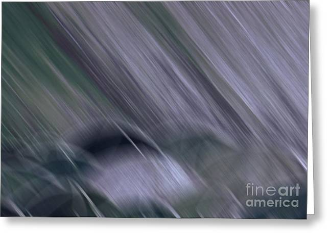 Rainy By Jrr Greeting Card by First Star Art