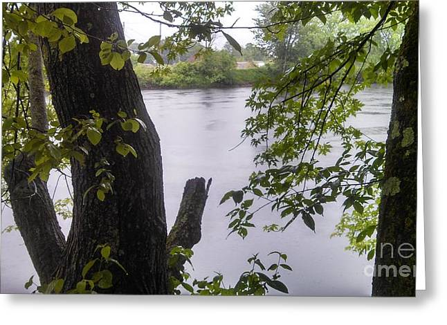 Rainy Day At The River Greeting Card by Lisa Gifford
