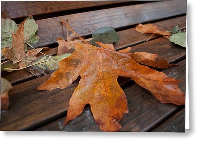 Rainy Day Bench Greeting Card by Gwyn Newcombe
