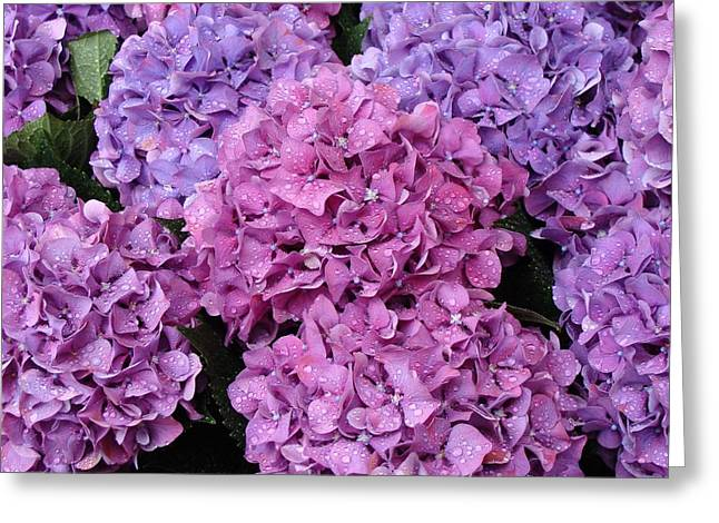 Greeting Card featuring the photograph Rainy Day Flowers by Ira Shander