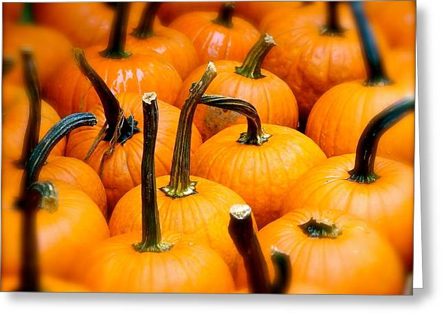 Greeting Card featuring the photograph Rainy Day Pumpkins by Ira Shander