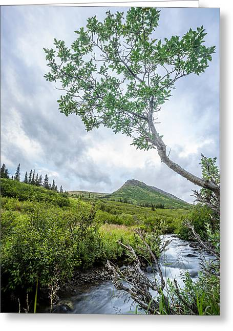 Rainy Evening On A Mountain Stream Greeting Card