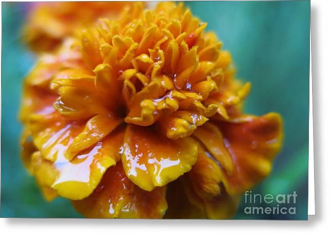 Rainy Marigolds Greeting Card