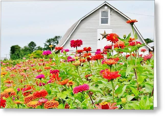Raising Zinnia Flowers - Delaware Greeting Card