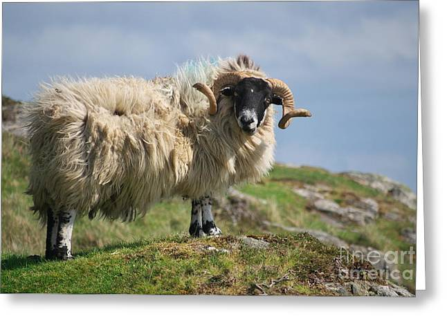 Ram Greeting Card by Juergen Klust