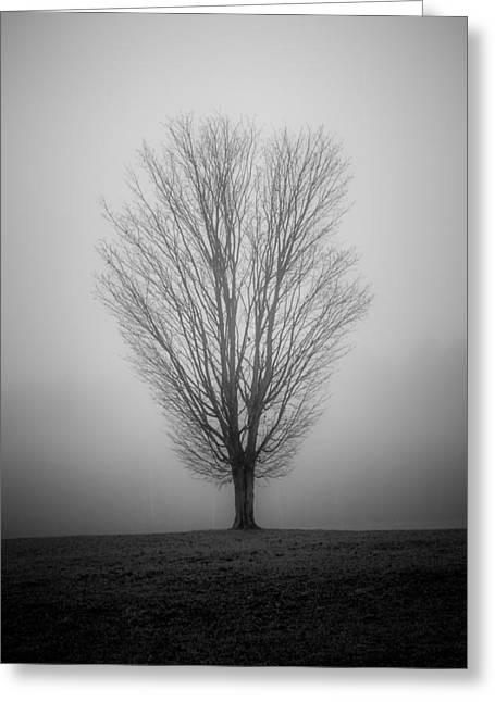 Ramblin' Tree Greeting Card by Robert Clifford