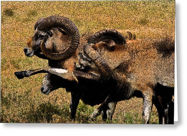 Greeting Card featuring the photograph Rams At Half-time by Doc Braham
