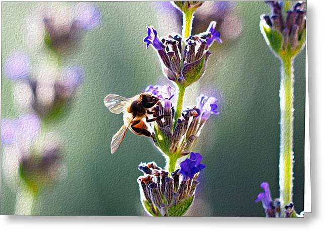Random Lavender Sampling Greeting Card