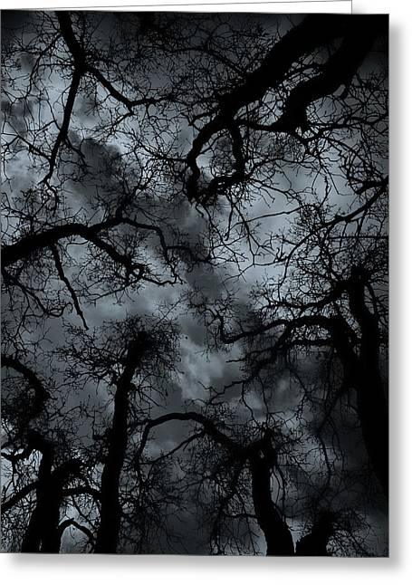 Random Thoughts - Nature Abstract Greeting Card by Steven Milner
