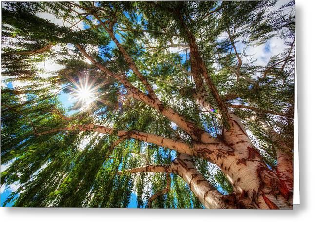 Random Tree Downtown Leavenworth Washington Greeting Card by Rscpics