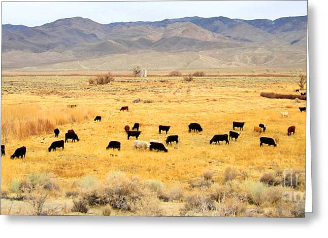 Range Cattle Greeting Card