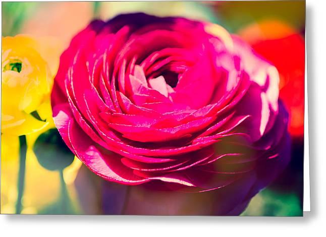 Ranunculus Squared Greeting Card by Sonja Quintero