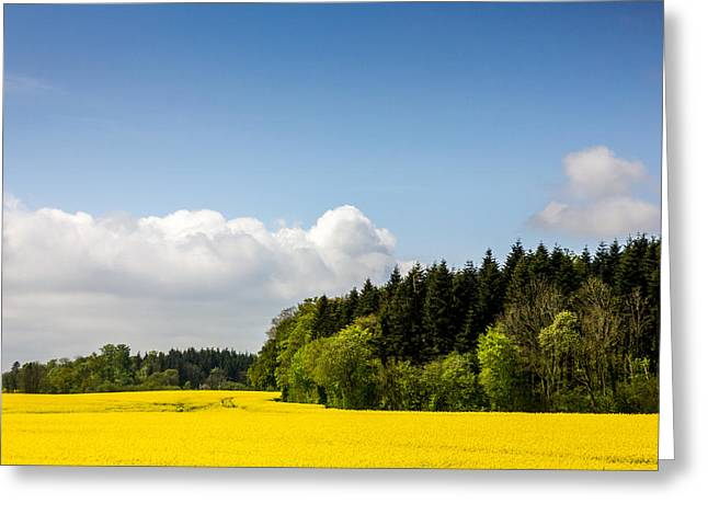 Rape Field And Forest Greeting Card by Pati Photography