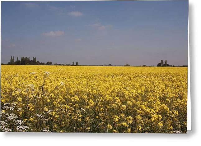 Greeting Card featuring the photograph Rapeseed Field. by Paul Scoullar