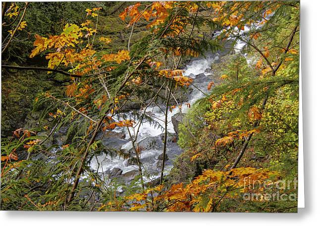 Rapids Through The Autumn Greeting Card by Darleen Stry
