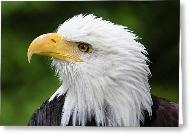 Raptor Center, Sitka, Alaska Greeting Card