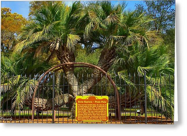 Rare Palm Tree Greeting Card
