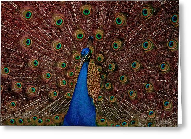 Greeting Card featuring the photograph Rare Pink Tail Peacock by Eti Reid