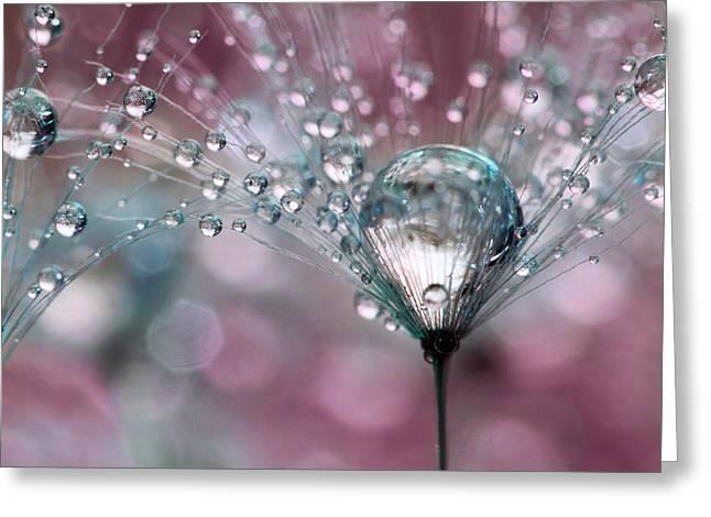 Rasberry Sparkles Greeting Card