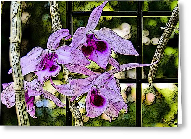 Raspberry Orchids Greeting Card
