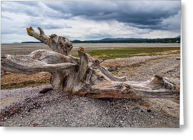 Rathtrevor Beach Stump Greeting Card by James Wheeler