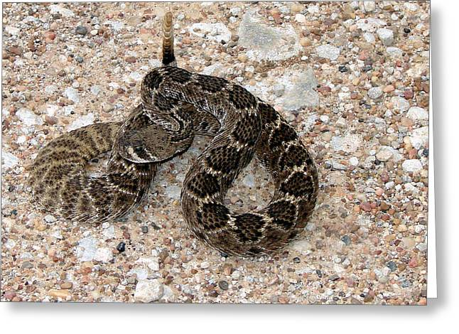 Greeting Card featuring the photograph Rattler by Linda Cox