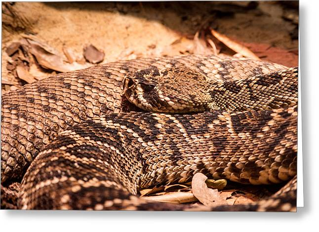 Rattlesnake Up Close And Personal Greeting Card by Douglas Barnett