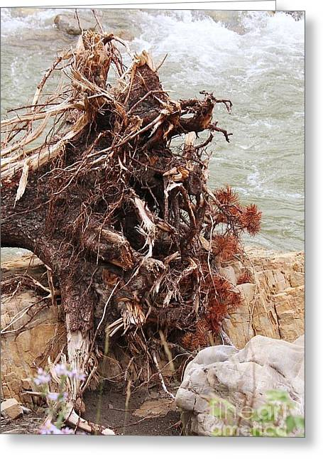 Ravaged Roots Greeting Card