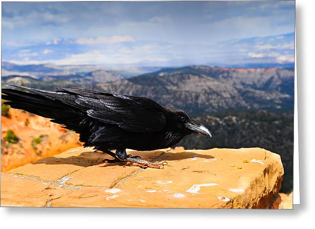 Raven Bryce Canyon Greeting Card