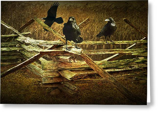 Raven Crows On A Split Rail Fence Greeting Card