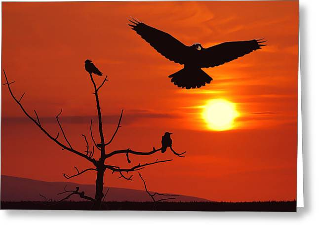 Raven Maniac Greeting Card by Ron Day