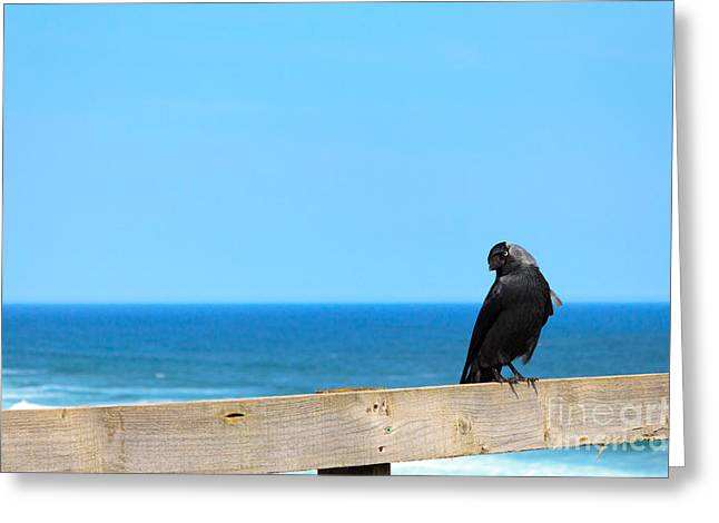 Greeting Card featuring the photograph Raven Watching by Peta Thames