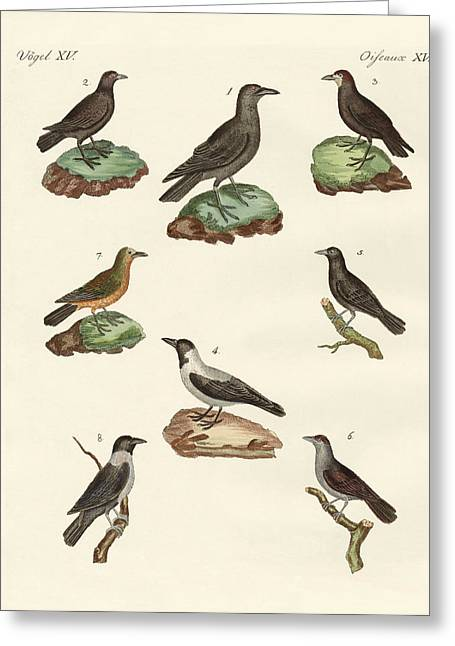 Ravens Crows And Daws Greeting Card