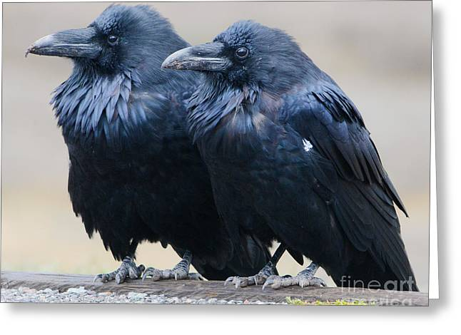 Ravens Greeting Card