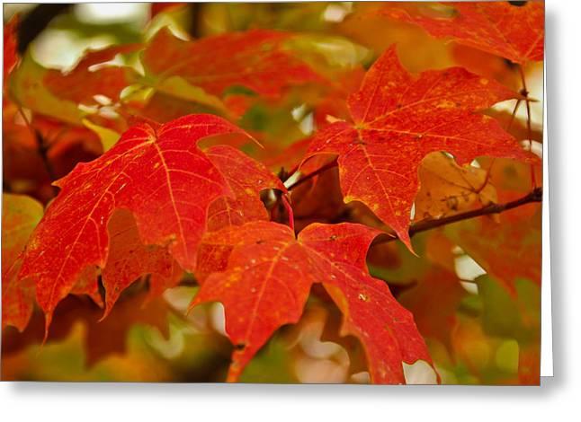 Ravishing Fall Greeting Card