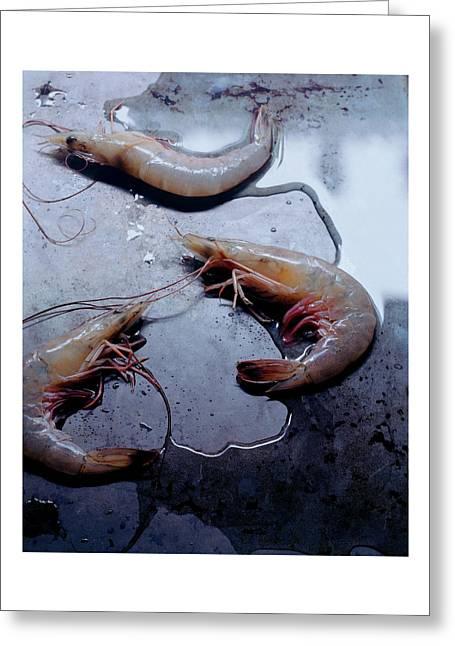 Raw Shrimp Greeting Card