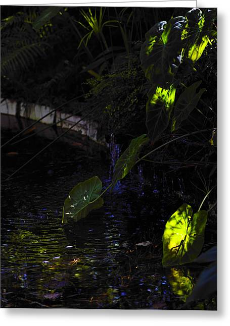 Greeting Card featuring the photograph Ray Of Hope by Silke Brubaker