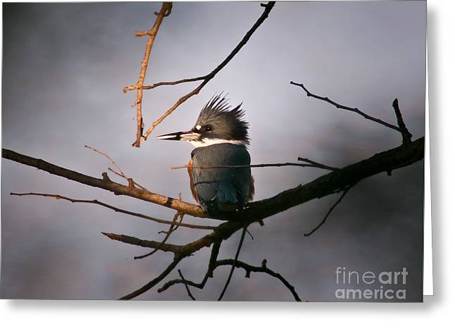 Ray Of Light On Kingfisher Greeting Card by Robert Frederick
