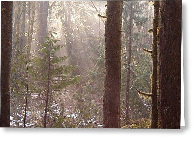 Rays Of Light In Forest Greeting Card