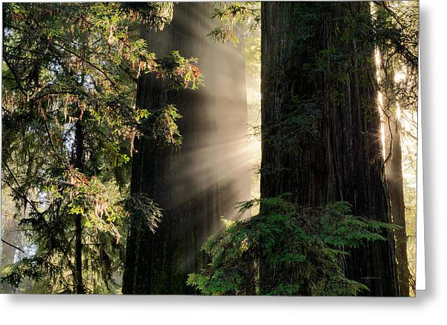 Rays Of Light Greeting Card by Leland D Howard