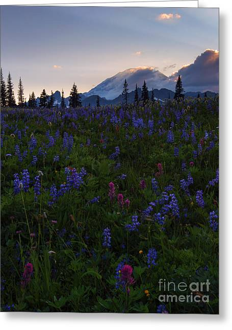 Rays Over Rainier Greeting Card by Mike  Dawson
