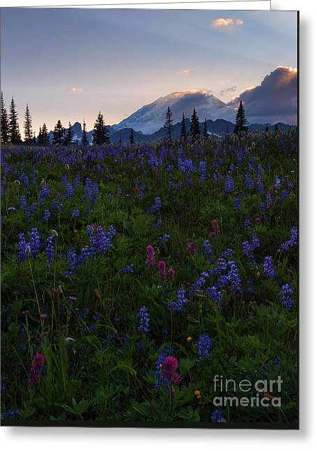 Rays Over Rainier Greeting Card