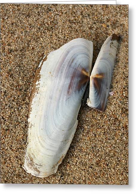 Razor Clam Greeting Card by Bob and Jan Shriner