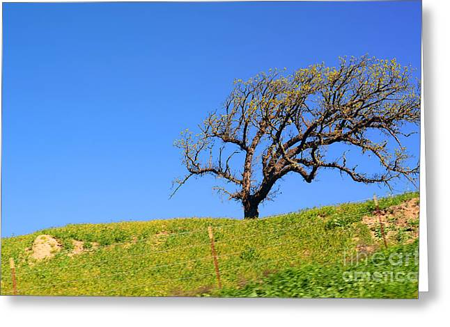 Greeting Card featuring the photograph Reach by Clayton Bruster
