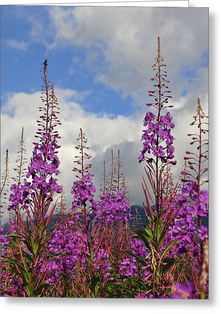 Greeting Card featuring the photograph Reach For The Sky by Cathy Mahnke