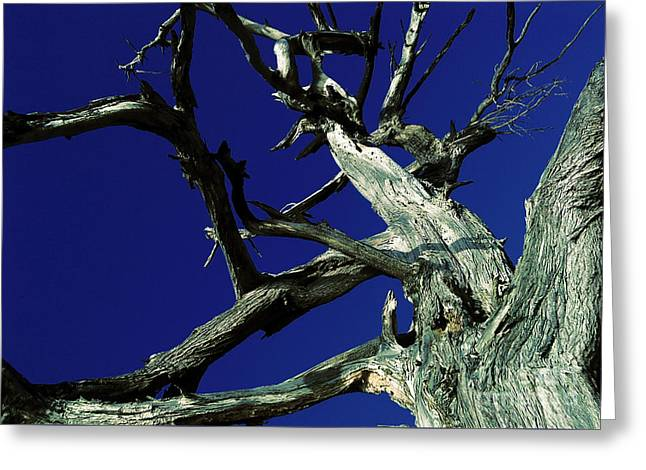 Greeting Card featuring the photograph Reach For The Sky by Janice Westerberg