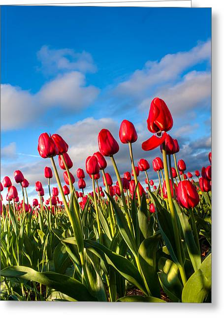 Reach To The Sky Greeting Card by Matt Dobson