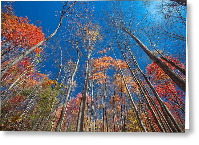 Reaching Color Greeting Card by Scott Moore