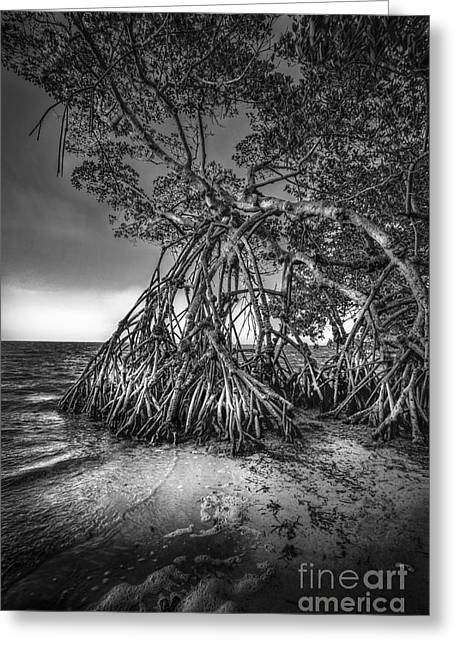 Reaching For Earth And Sky-bw Greeting Card by Marvin Spates
